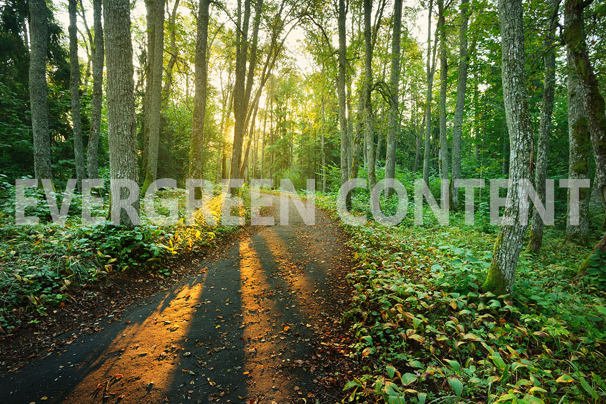 Why You Need Evergreen Content